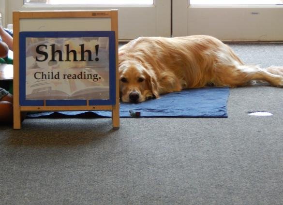 Gaining reading confidence: Paws to Read and Reading Buddies